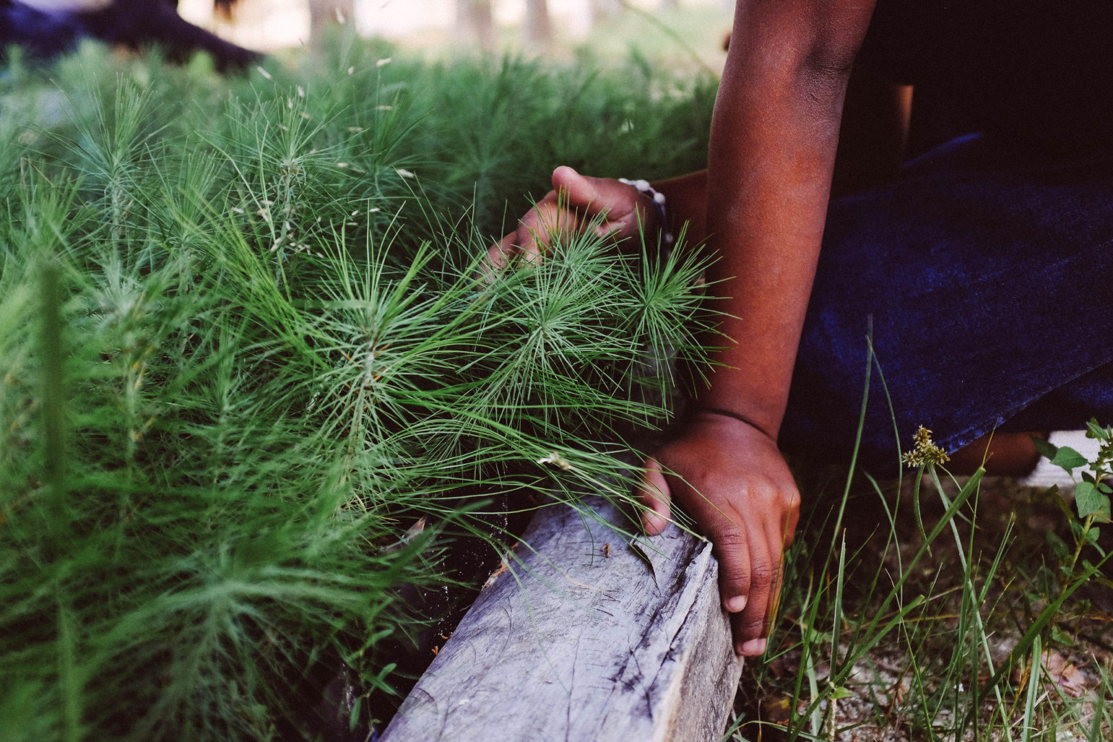 Plant With Purpose Mexico has planted close to a million trees