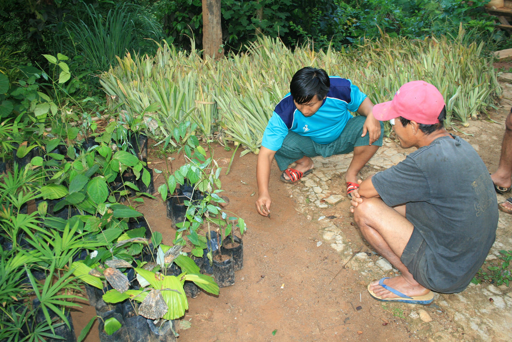 Backyard garden projects in Thailand create new opportunities