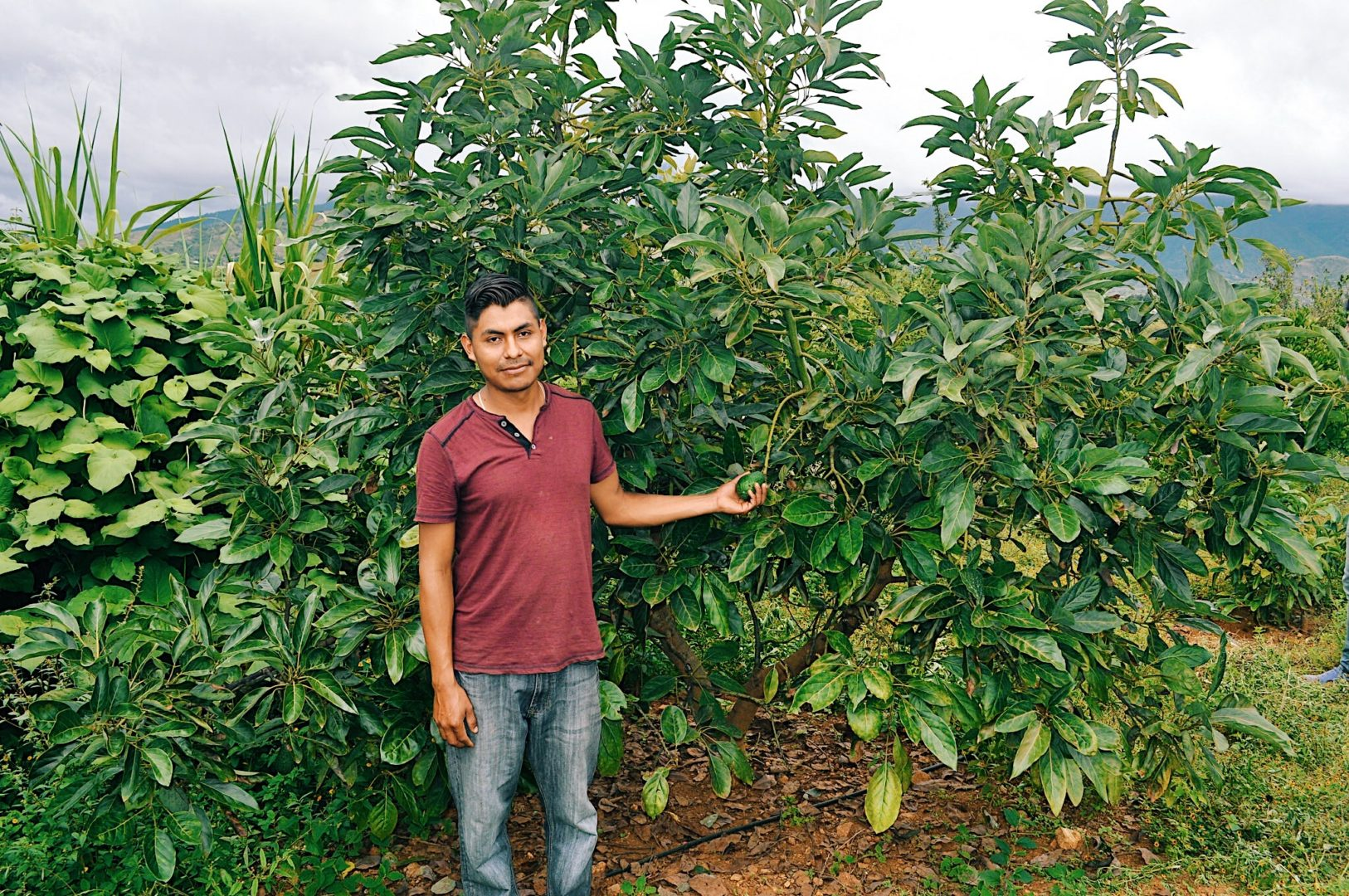 Avocados help Javier provide for his family.