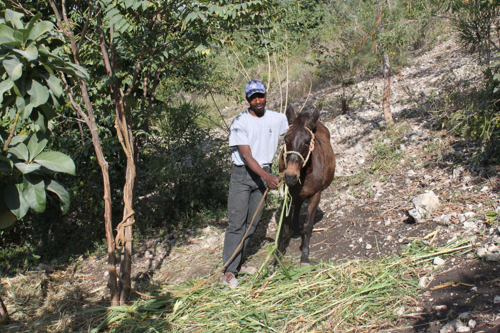 A participant farms a steep hillside in Haiti