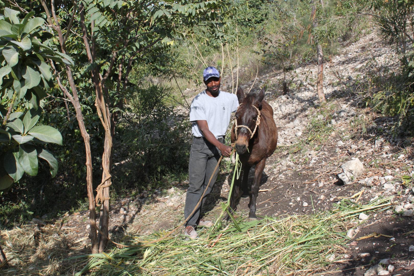 A participant farms a steep hillside in Haiti