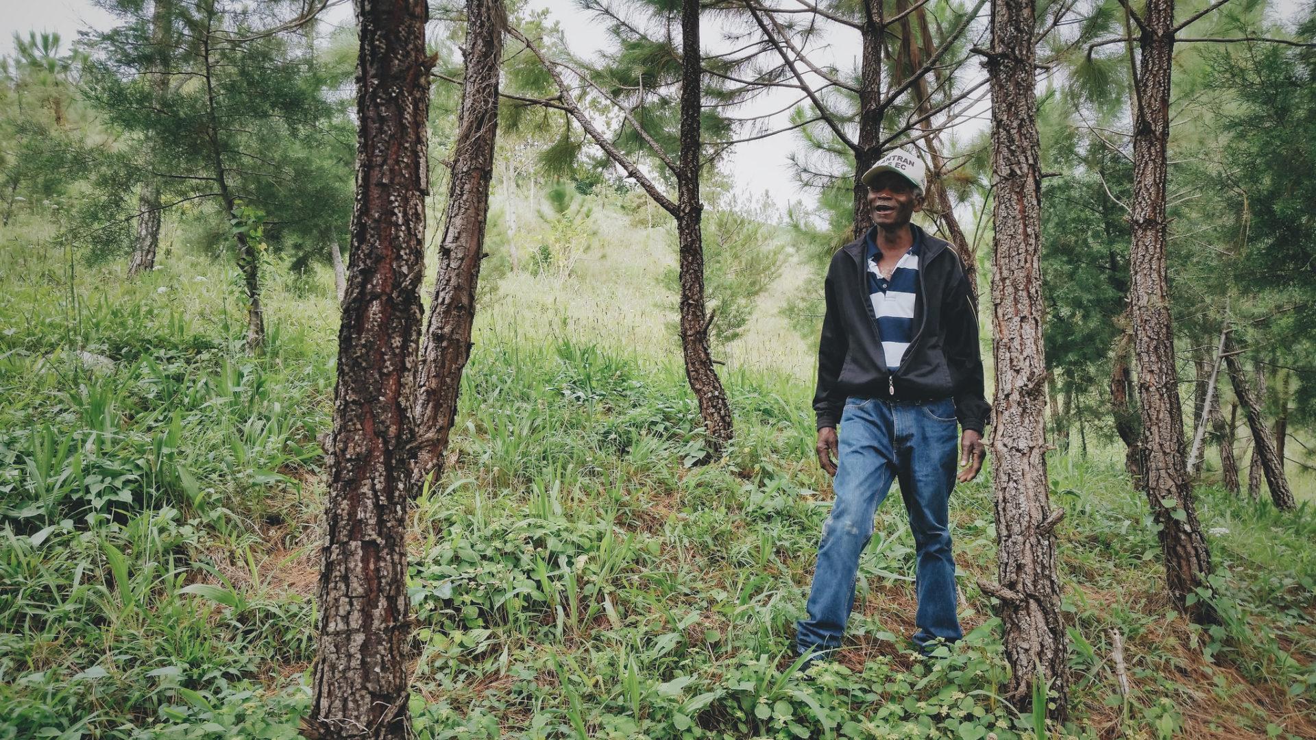 Walking through a Haitian forest.