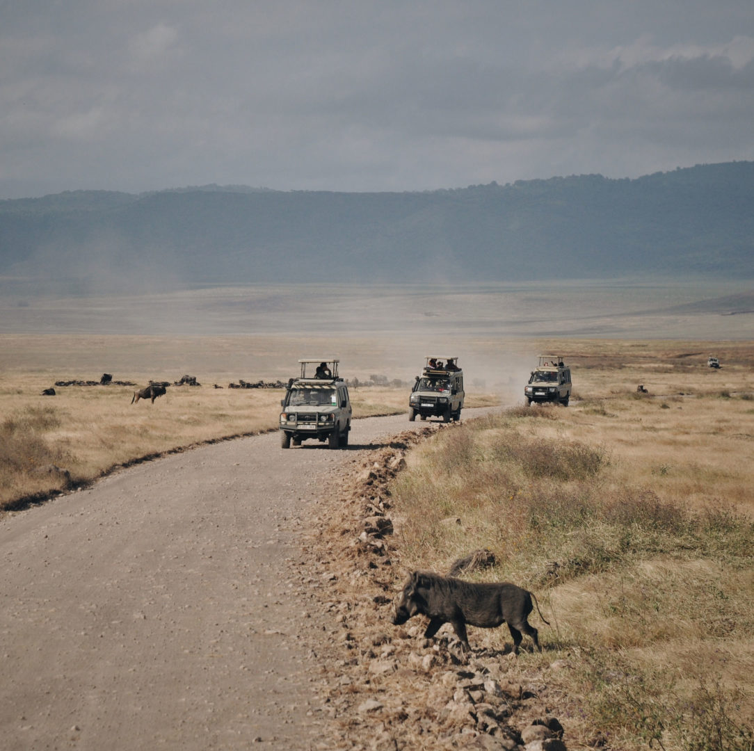 Locally owned safari groups in Tanzania welcome visitors