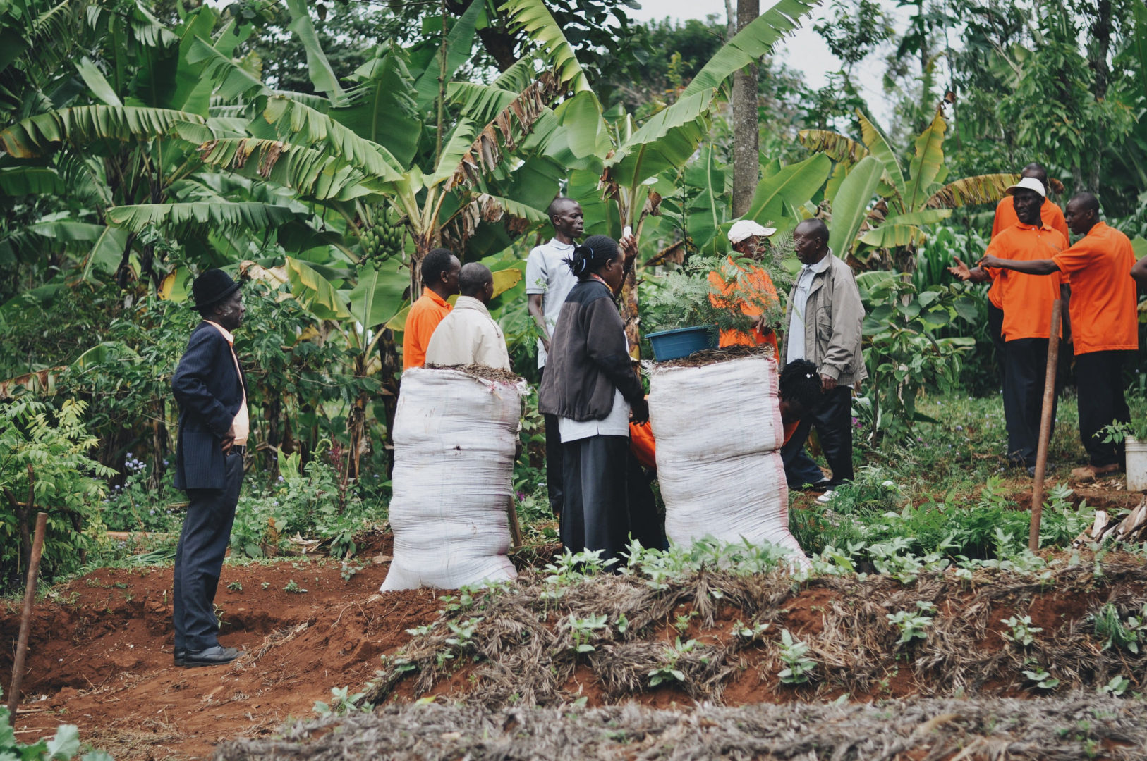 A farmer field school in Rombo, Tanzania.