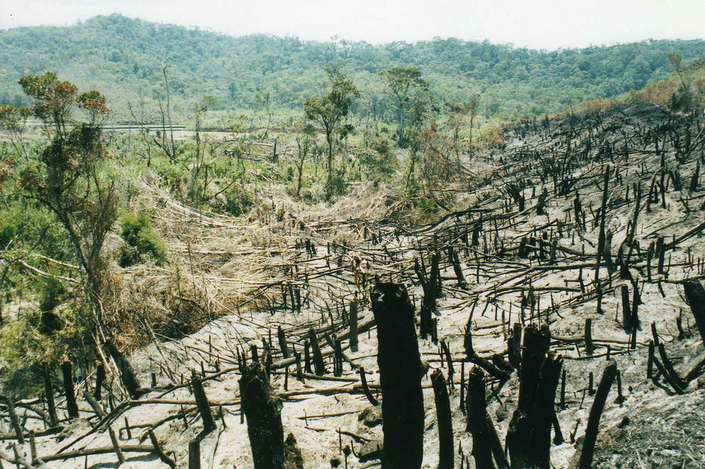 Deforestation is one of Guatemala's big environmental issues.