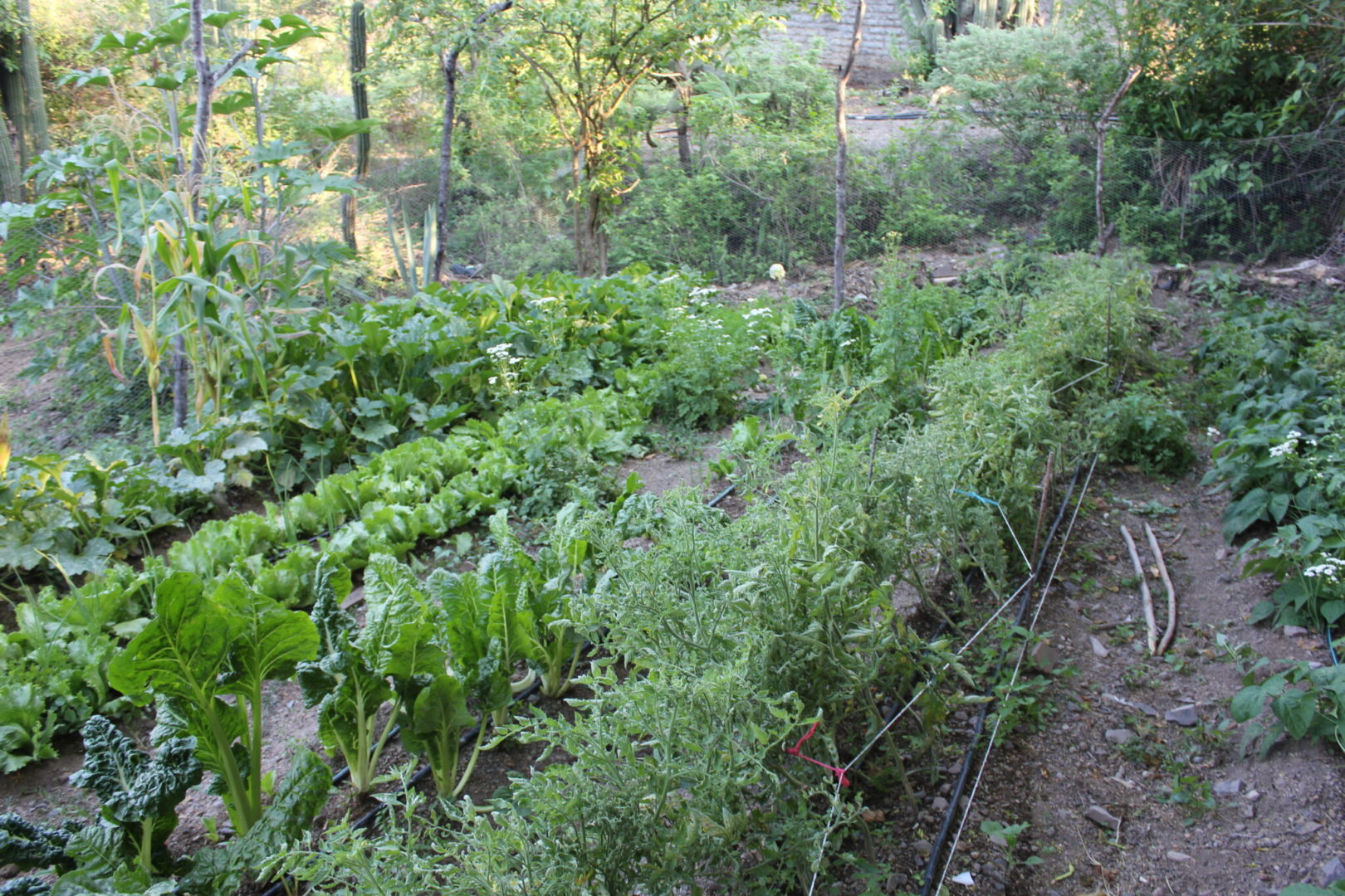 Growing cooking herbs can be a great introduction to gardening.