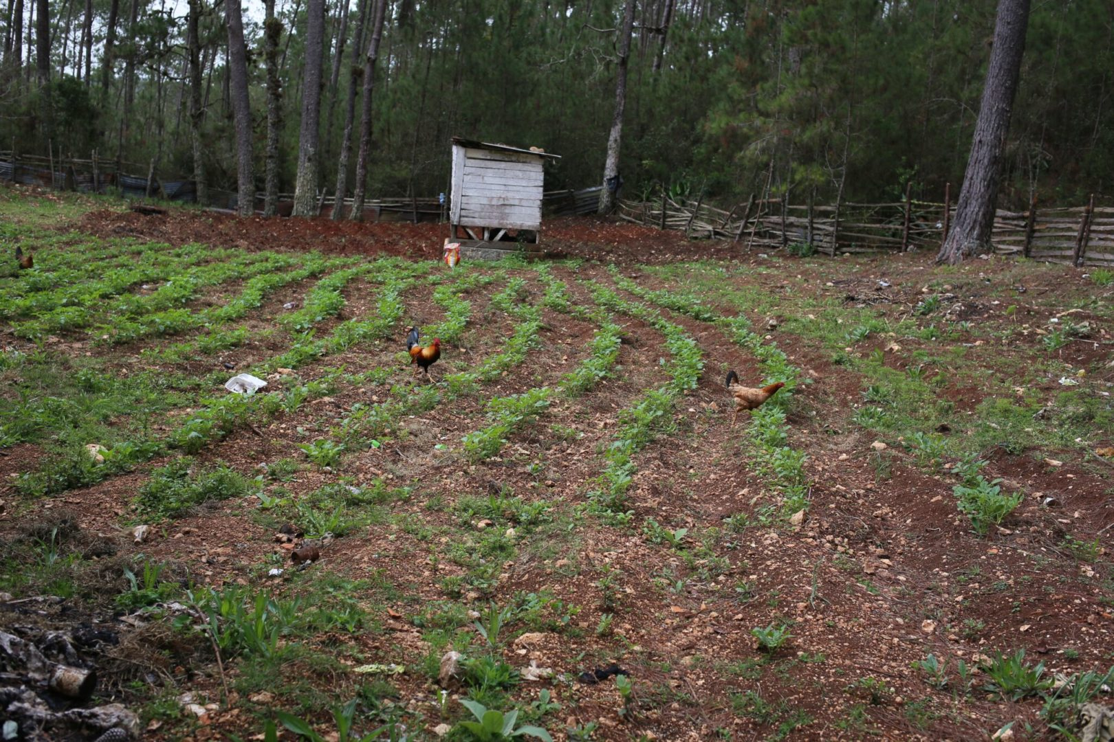 Soil health is key for effective gardening