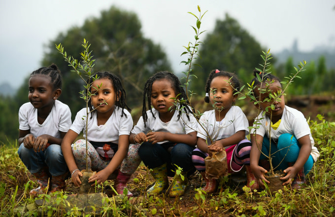 Ethiopia Breaks World Record by Planting Over 350 Million Trees in One Day