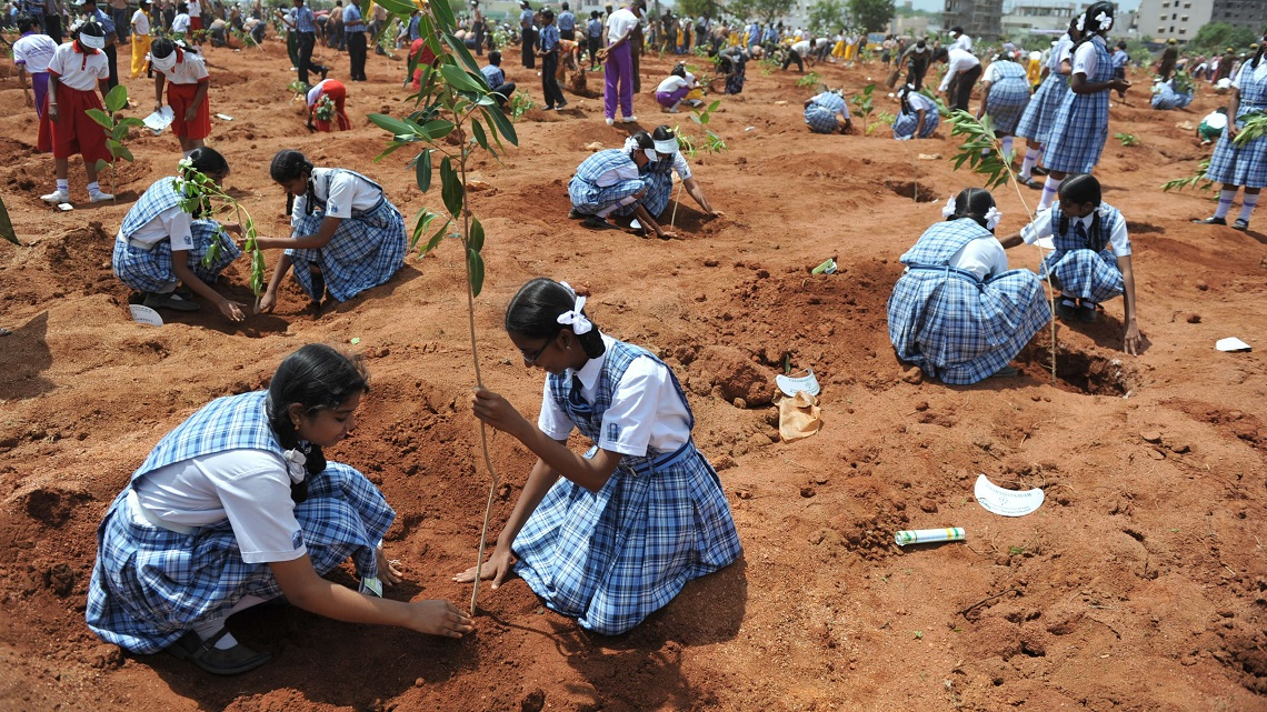 India planted 50 million trees in one day