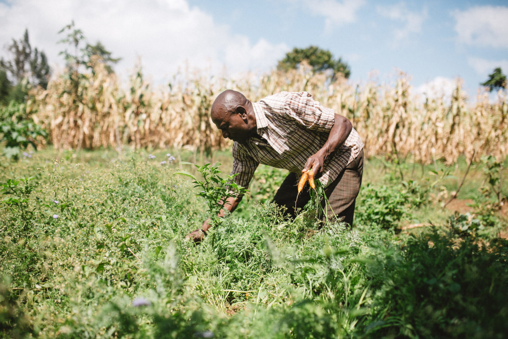 Farmers are embracing their roles as caretakers of creation