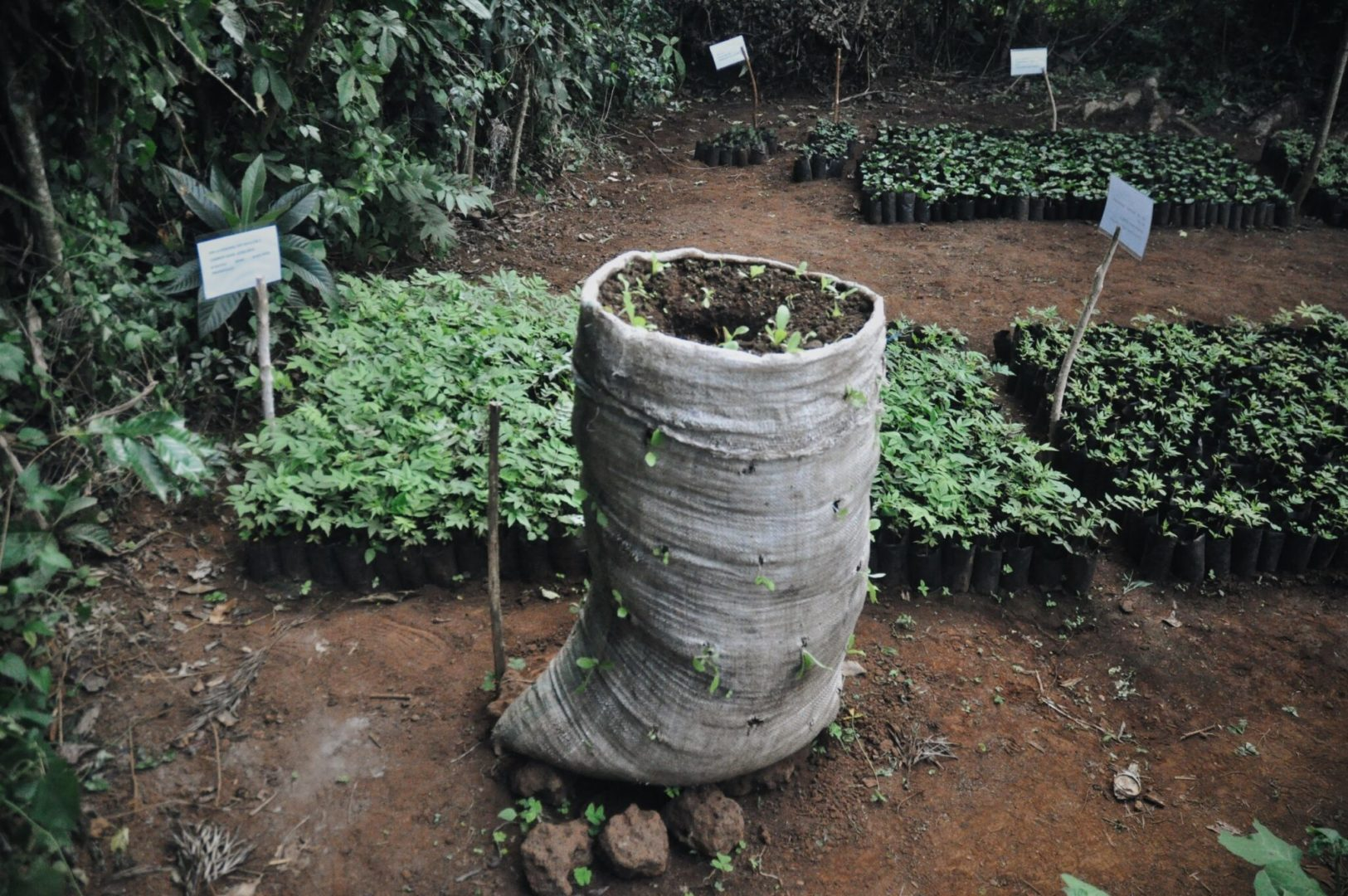 A sack garden provides more planting area