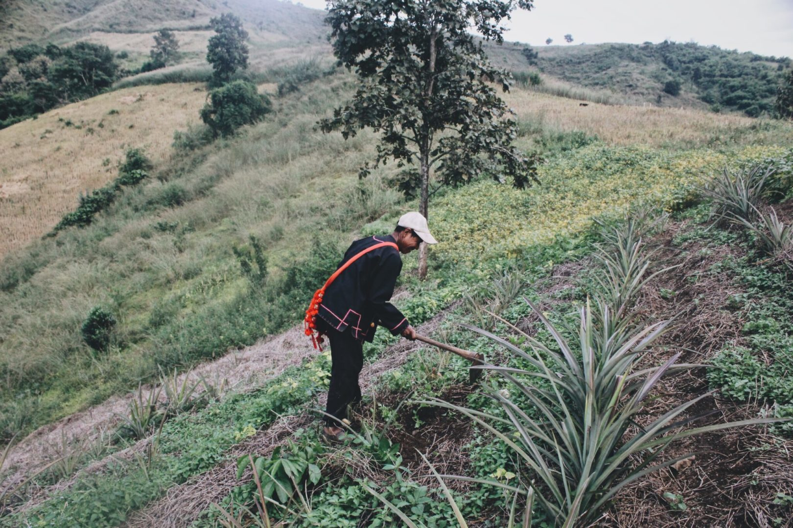 Some communities rely on agriculture for a living