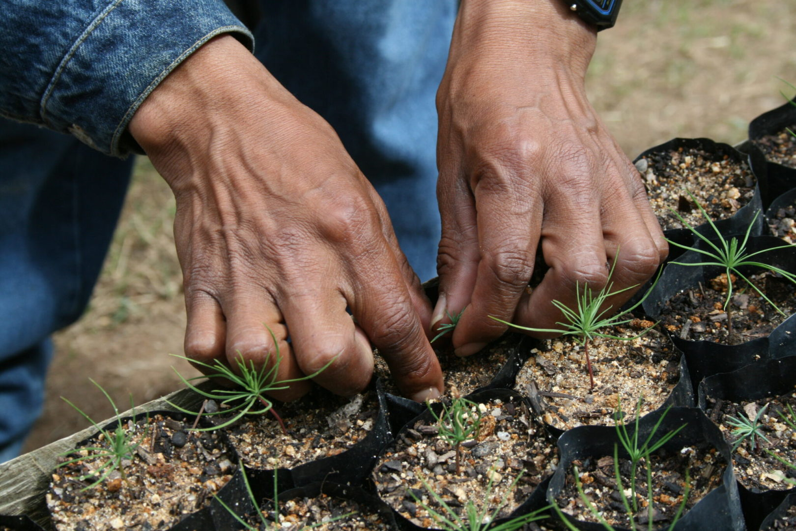 The value of reforestation