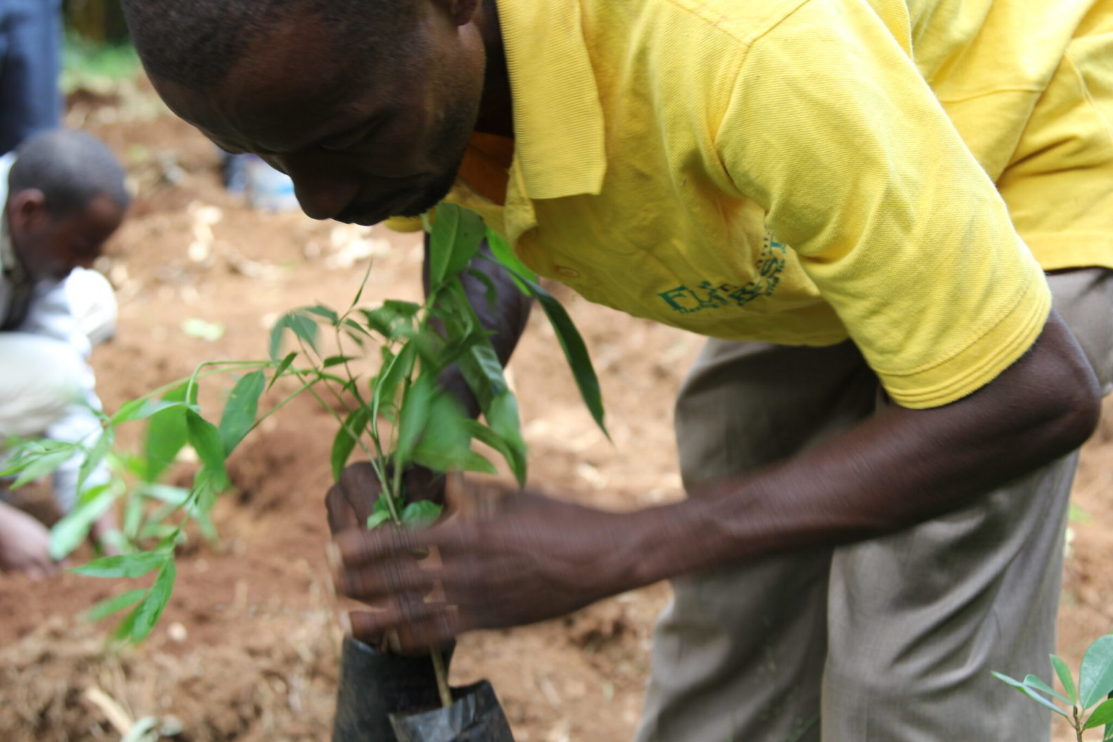 A community member in Tanzania plants a tree